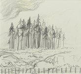 firs & a fence, seen from the train, 10x11cm
