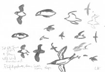 Isle of May flight sketches (3), 14x21cm