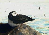 Isle of May puffin, 15x21cm