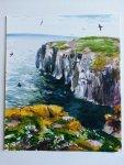 Isle of May, 2014 (11)