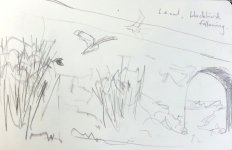 long-eared owl chased from the elder by a blackbird, 13x20cm