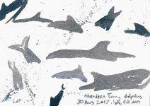 Torry dolphins 1, 15x21cm