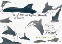 Torry dolphins 2, 15x21cm