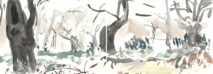 ancient beeches, diptych, 15x42cm