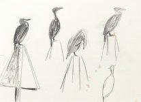 cormorant, Montrose