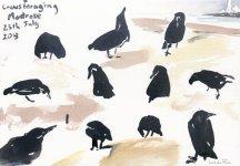 crows foraging, Montrose shore, 15x21cm