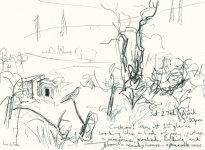 cuckoo study, near Garelochhead
