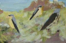 fieldfare and wheatears, Isle of May, 15.5x24cm