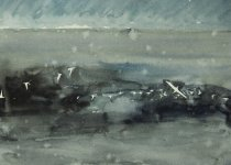 gannets in the rain, Isle of May, 15x21cm