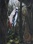 great spotted woodpecker, 28x37cm