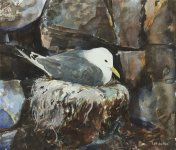 nesting Kittiwake, 25.5x29cm