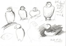 puffin day, 5.30pm, 15x21cm