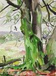 rain-fresh trunks, hooded crow, , 25x35cm ish