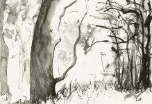 woodland rain, 15x21cm