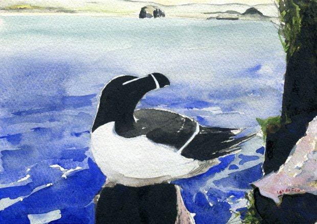 Isle of May razorbill, Bass Rock & Berwick Law, 15x21cm